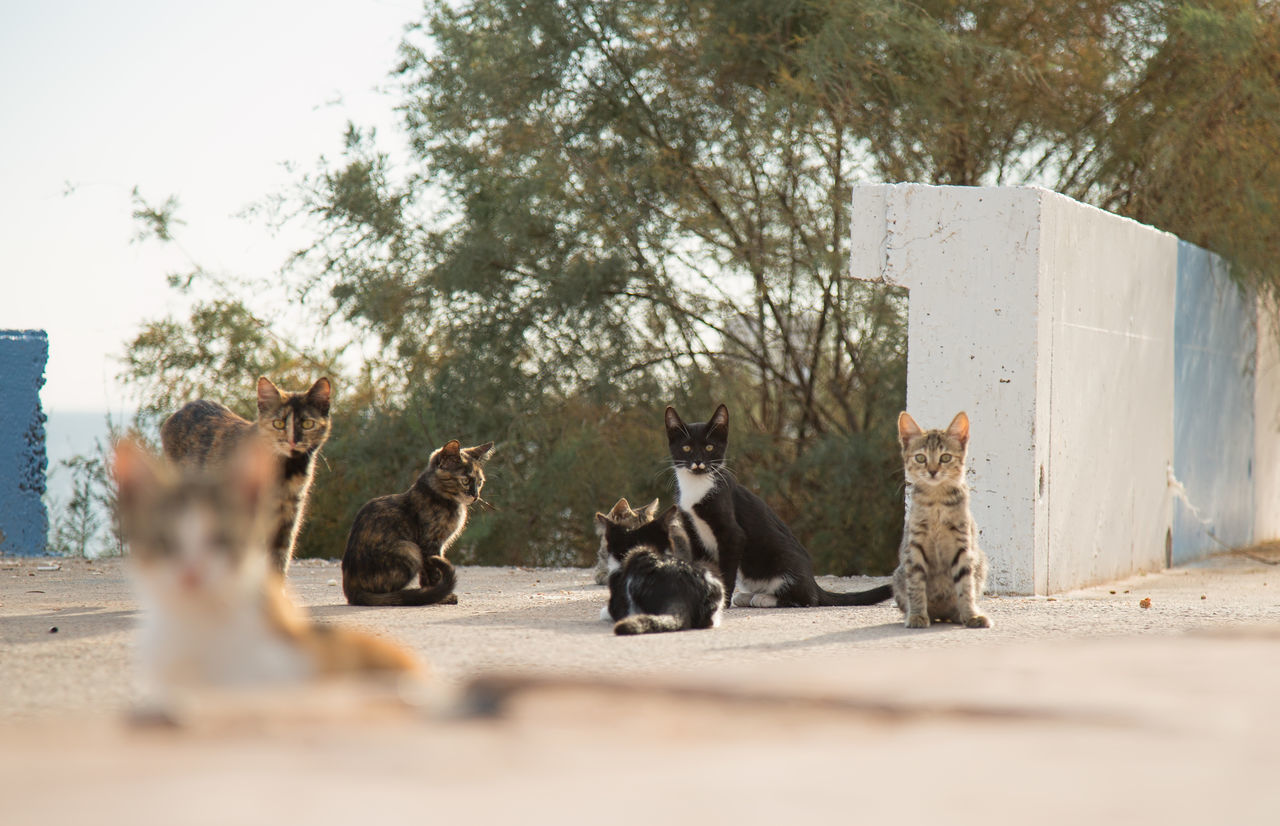 Street Cats Animal Themes Boulder Cats Coastline Day Domestic Animals Feline Feline Portraits Mammal Mersin Turkey Nature No People Outdoors Rock Formation Street Cats Tree