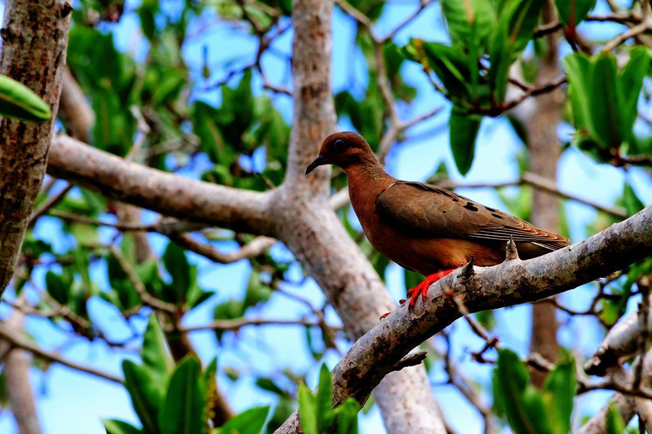 Beautiful stock photos of brazil, Animal Themes, Animals In The Wild, Bird, Branch