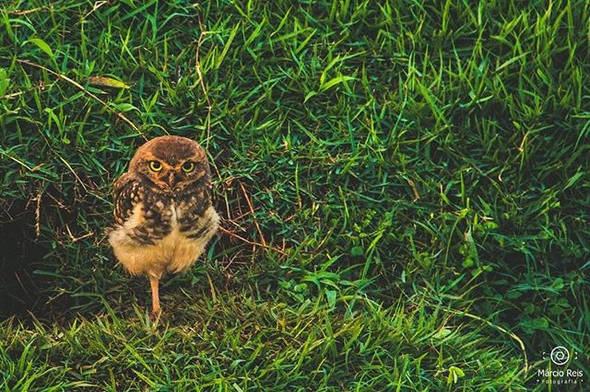 Alguma legenda? subtitles ? Fotos Fotografie Canon Nikon Londrinense Londrina 500px YOUPIC Nature Natureza Birds Paraná Olhares