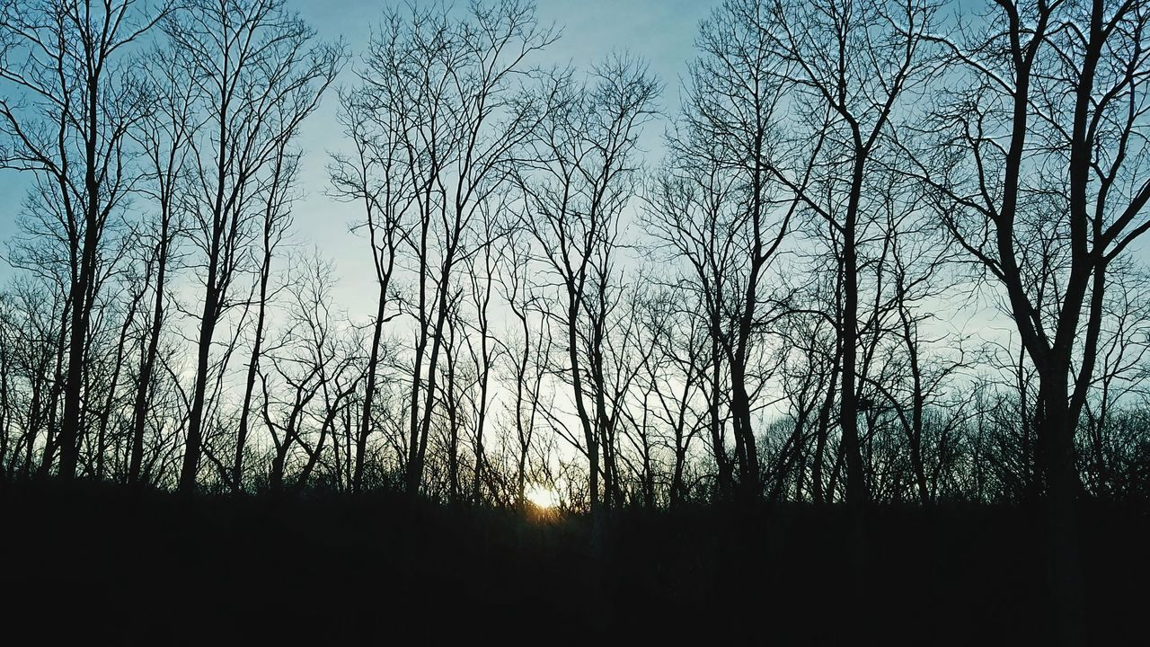 Daylight fades Sky Sunset No People Silhouette Tree Nature Outdoors Eye4photography  Samsung Galaxy S7 Edge Landscape Tranquility Trees In Winter