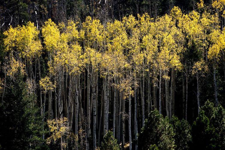 Arizona Flagstaff Lockettmeadow Fall Fall Beauty Fall Colors