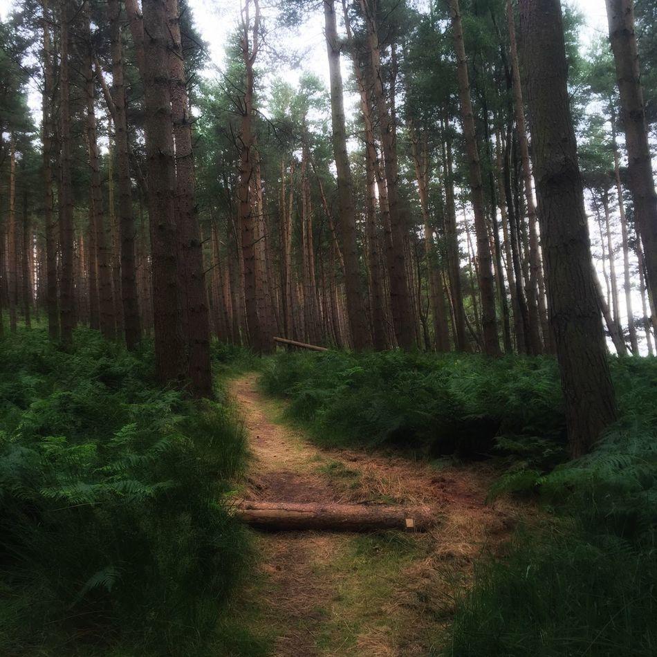 Let's Walk Enchanted Forest Temple Forest Landscapes Lost Landscapes