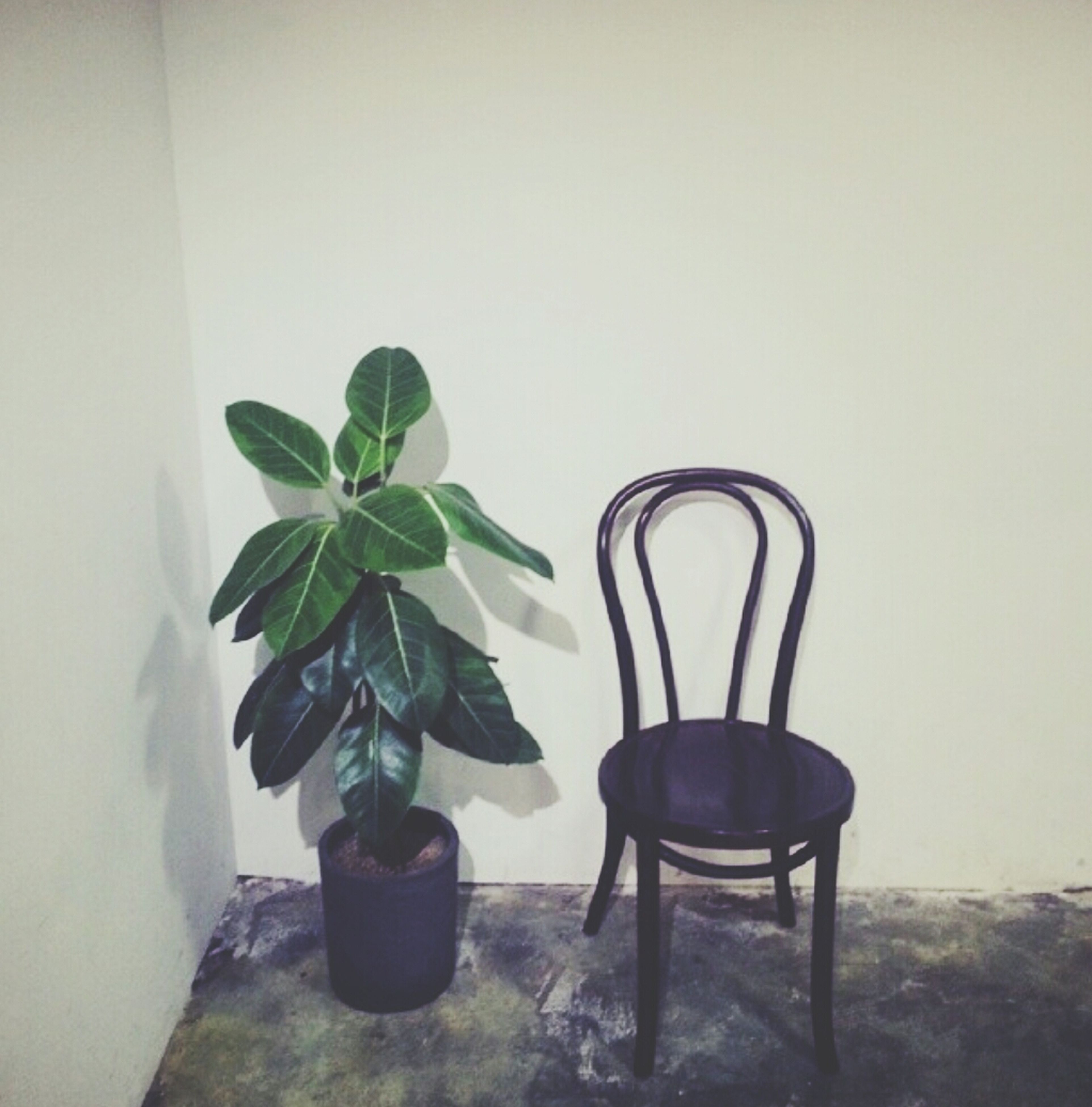 indoors, potted plant, table, chair, plant, wall - building feature, home interior, vase, absence, growth, wall, leaf, empty, still life, pot plant, copy space, green color, day, no people, flower pot