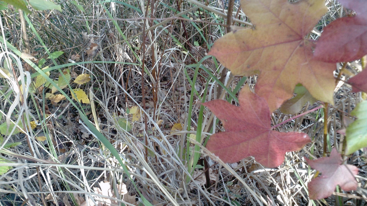 Autumn Beauty In Nature Close-up Day Fragility Fungus Grass Grass Growth Leaf Nature No People Outdoors Plant Plants Red Tranquility Winter