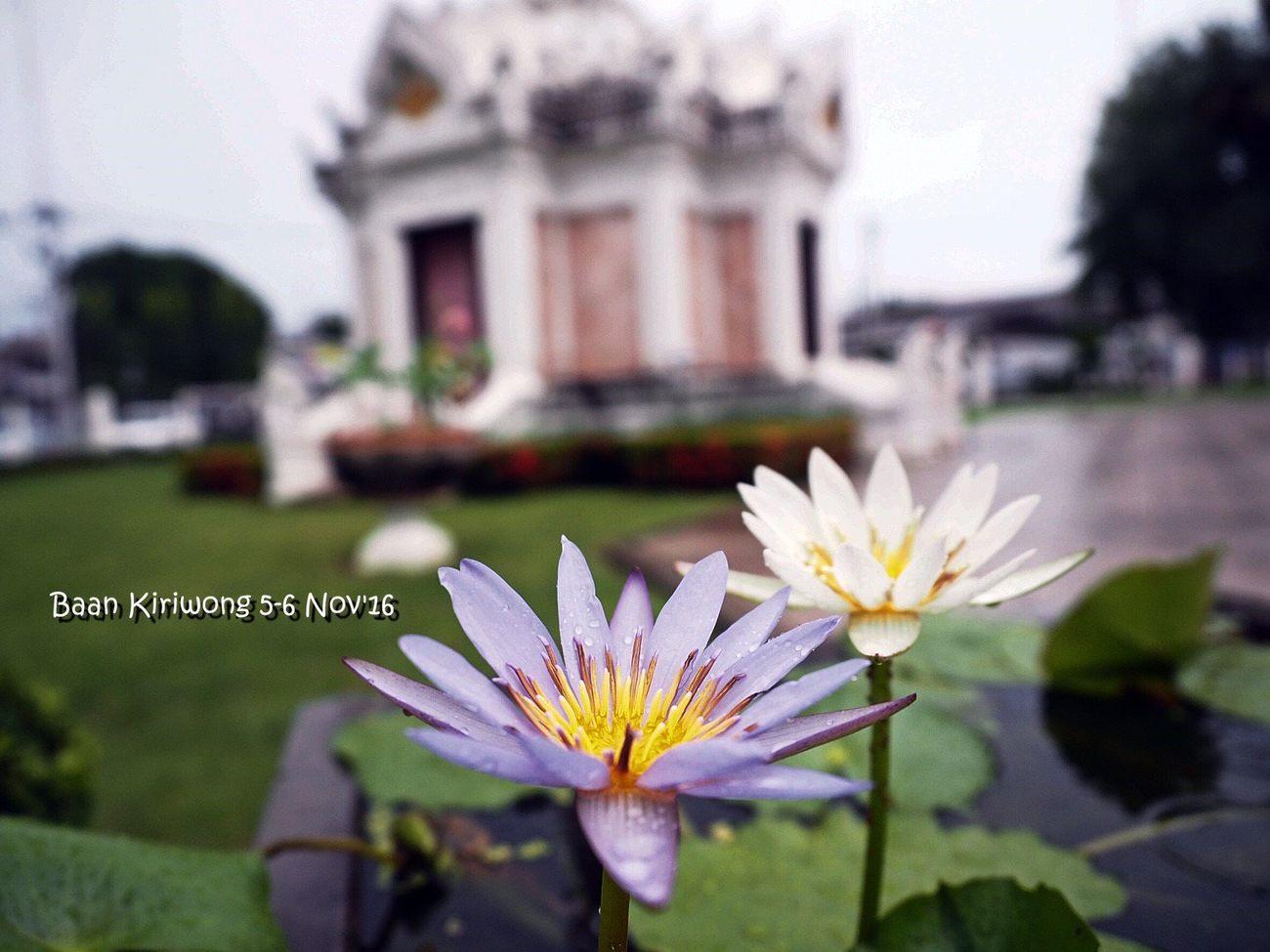 Nakhon Si Thammarat First Eyeem Photo