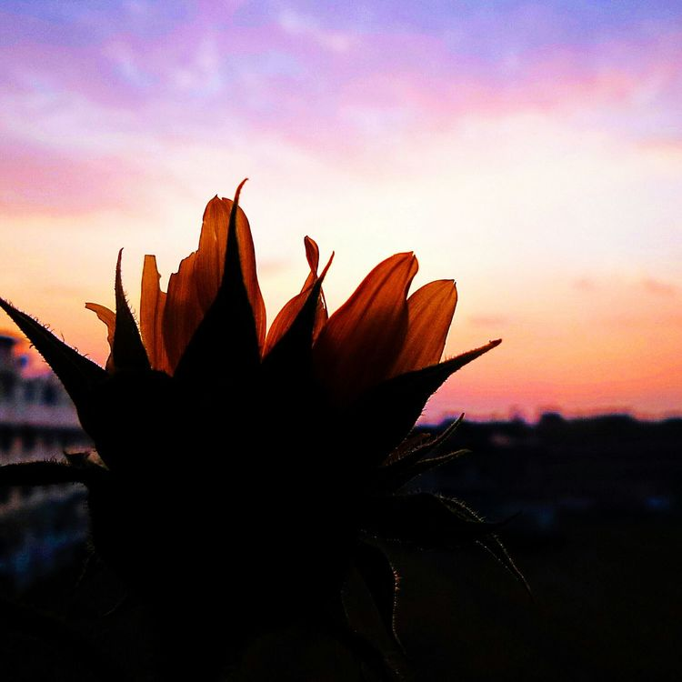 Taking Photos EyeEm Best Shots From My Window Sun_ Collection
