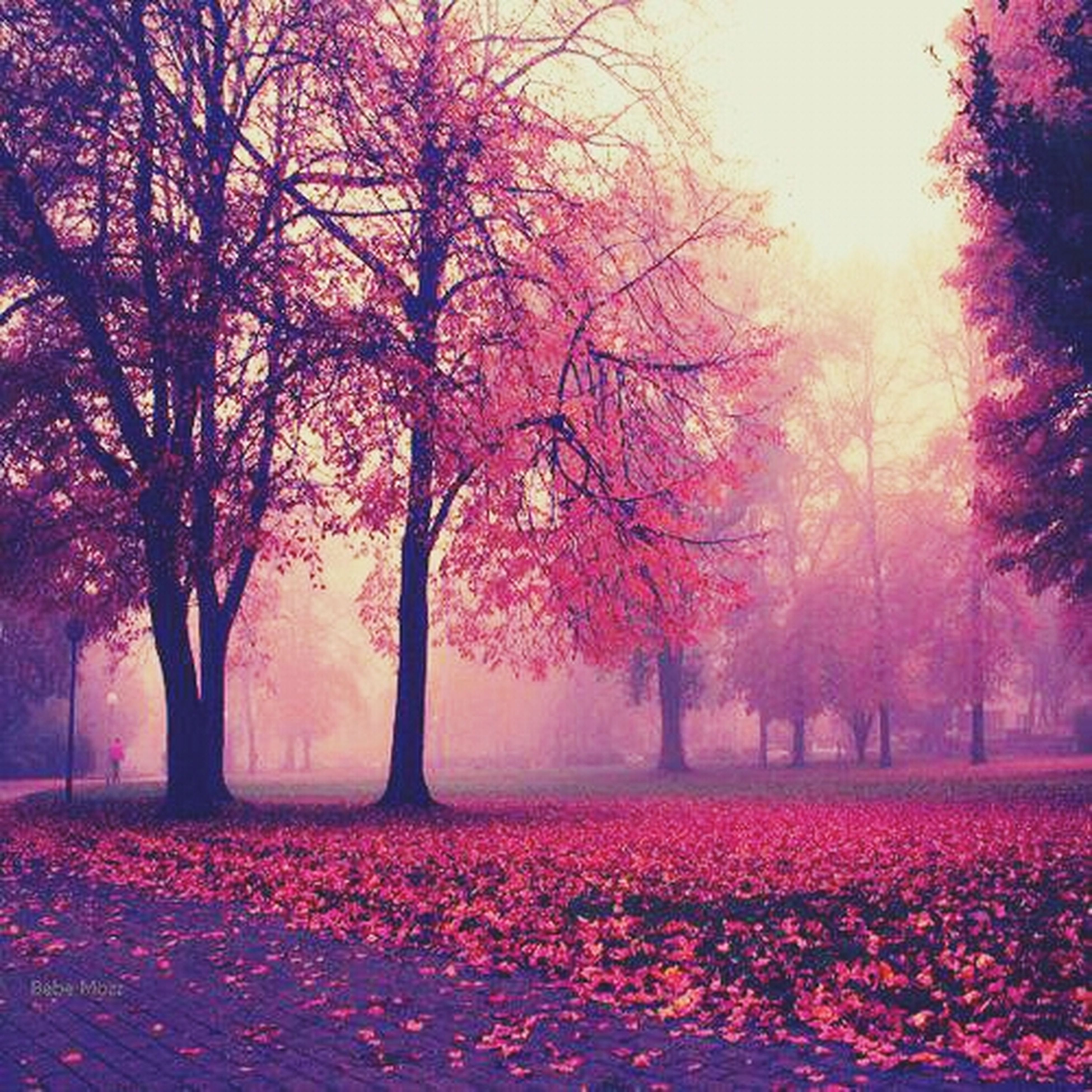 tree, beauty in nature, nature, pink color, tranquility, tranquil scene, growth, scenics, branch, park - man made space, season, flower, landscape, autumn, field, bare tree, outdoors, red, park, change