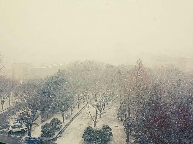 Winter University Of Suwon Snow 폭설 Phonecamera South Korea 눈 Usw Heavy Snow 와우리스키장 January2016 PhonePhotography WHiTE WORLD