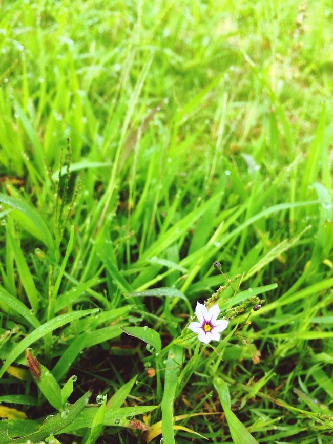 朝露 Morning dew Beautiful VariousColors Enjoying Life Nature Flower EyeEm Nature Lover