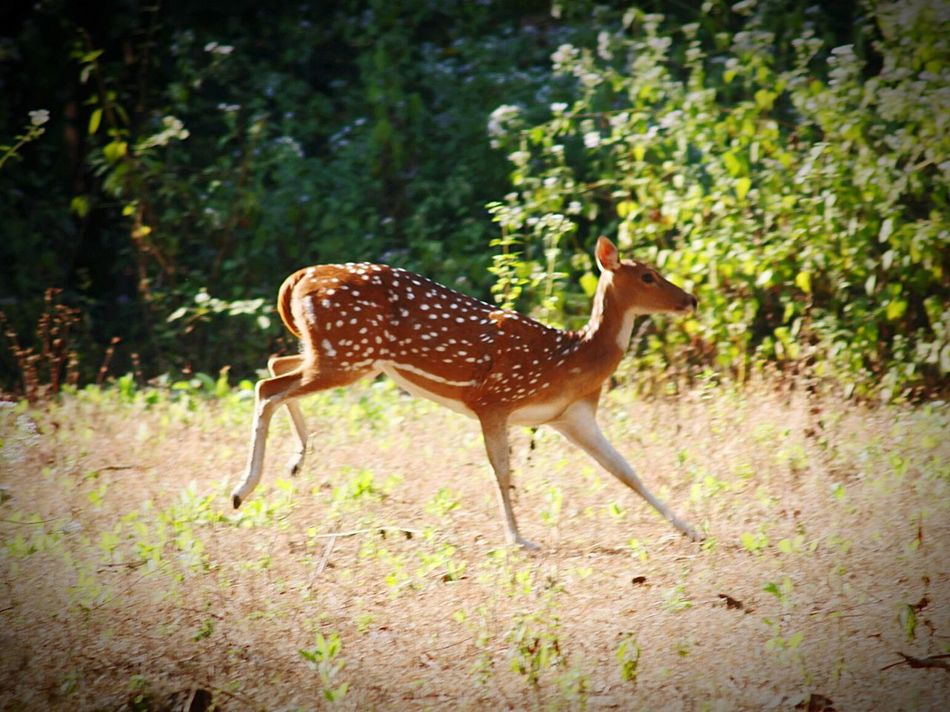 Photography In Motion Dear Diary  Fear Of The Unknown First Eyeem Photo Indianphotography India National Park Wildlife Photos