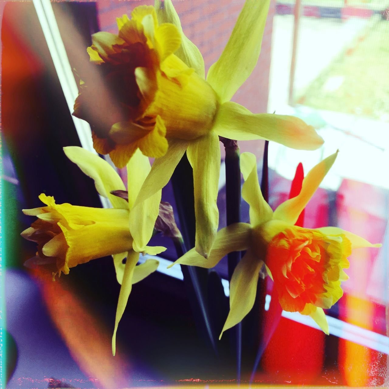 Art Is Everywhere Flower Fragility Petal Flower Head Freshness No People Beauty In Nature Nature Close-up Plant Day Growth Indoors  Day Lily