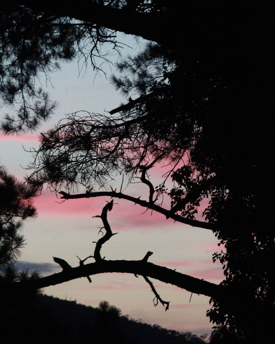Sunset in my Beautiful Home Warburton Yarra Valley Tree Silhouette Nature Branch Beauty In Nature Tranquility Growth Scenics Sky Beauty In Nature Grateful