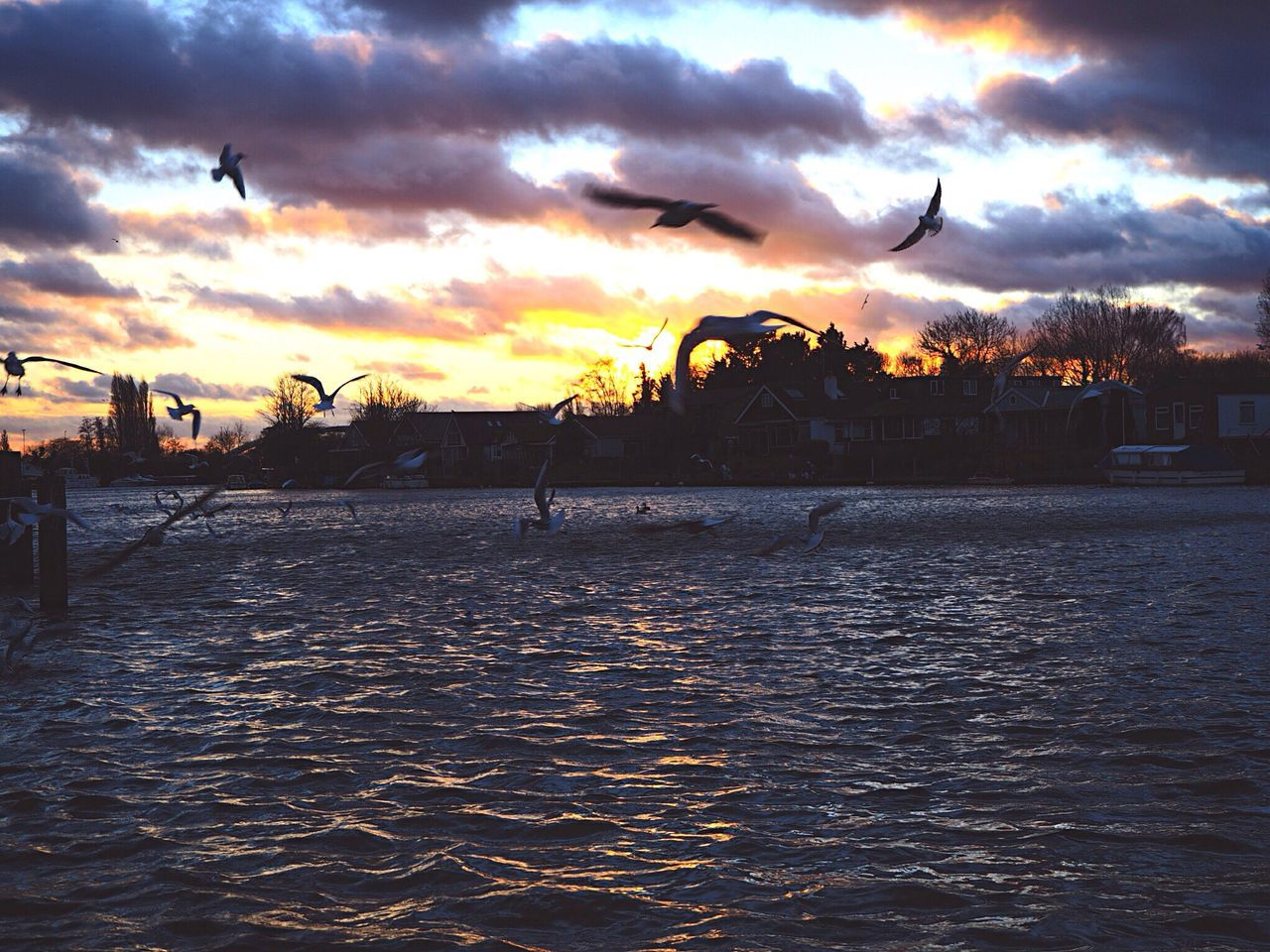 sunset, cloud - sky, water, sky, silhouette, nature, sea, beauty in nature, outdoors, bird, scenics, flying, no people, animal themes, animals in the wild, architecture, spread wings, city, day