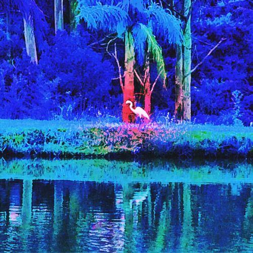 Sítio Avare SP BRASIL ☀️ 🐎 🇧🇷 Sunset #sun #clouds #skylovers #sky #nature #beautifulinnature #naturalbeauty #photography #landscape Usa #igersusa #ig_unitedstates #rockin_shotz #just_unitedstates #insta_crew #gf_usa #nature #rsa_rural #instagramhub #allshots_#world_shooters #insta_america #ig_captures #centralfeed #webstagram #ic_landscapes #wonderful_america #storyofamerica #instagra All_shots #Portrait #Vscocamphotos #Likesforlikes #Photographs #Photographylovers #TopLikeTags #Outdoorphotography #Likesreturned #Silhouette #Likeforlike #Art #Contrast #Landscaped #TagStaGram #love #friends #tagstagram #photooftheday #selfie #amazing #f EyeEm EyeEm Gallery HDR EyeEmBestPics EyeEm Best Shots EyeEmBestEdits Avare Heaven