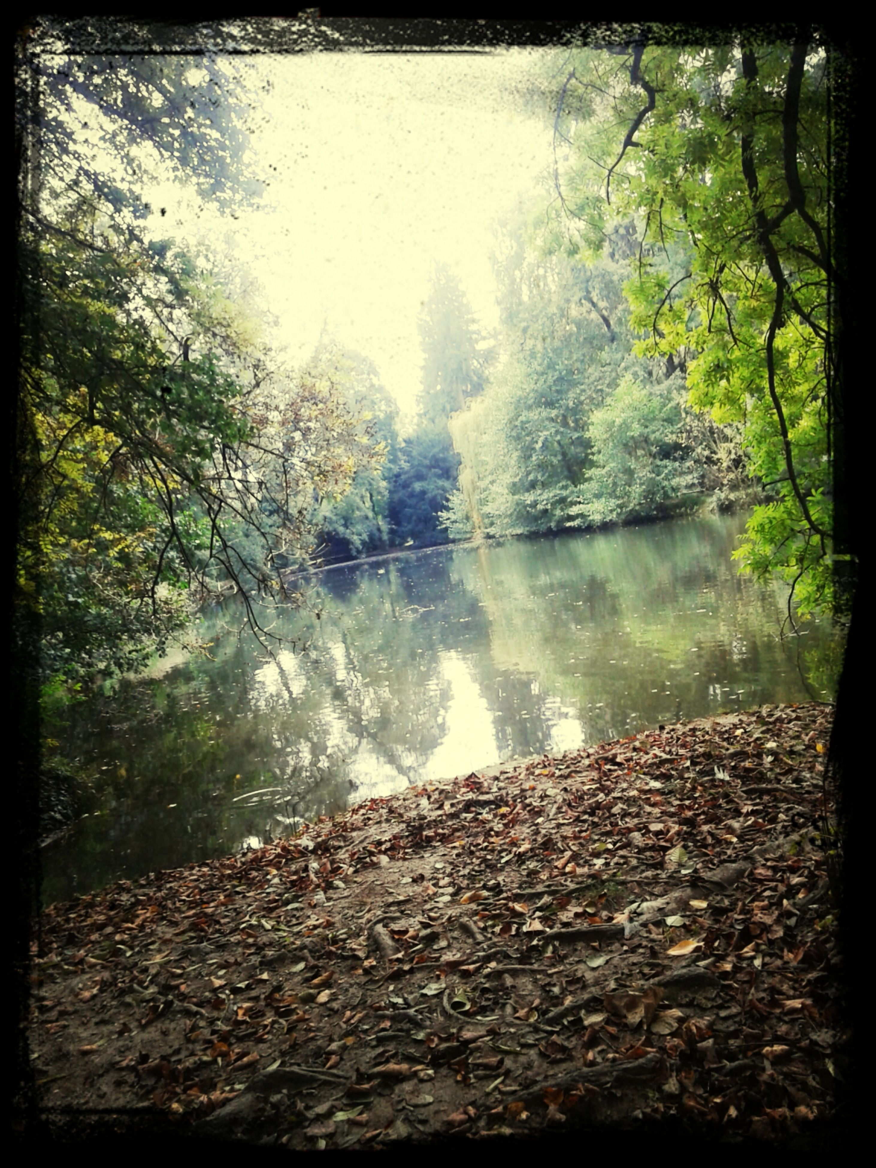 water, transfer print, tree, tranquility, auto post production filter, tranquil scene, reflection, lake, scenics, nature, beauty in nature, river, stream, forest, day, non-urban scene, outdoors, idyllic, no people, rock - object