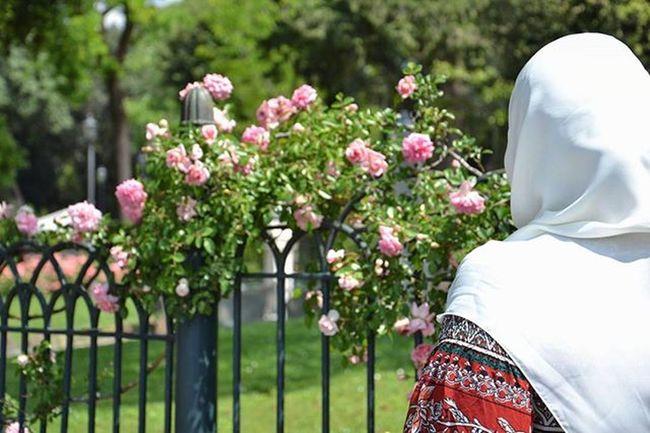 🌹 Hijab Scarf White Rosé Rosa Flower Flowers Fiori Fiore Park Parco Islam Muslim Muslima Ilpincio Ilpinciodiroma Pincio Roma Rome