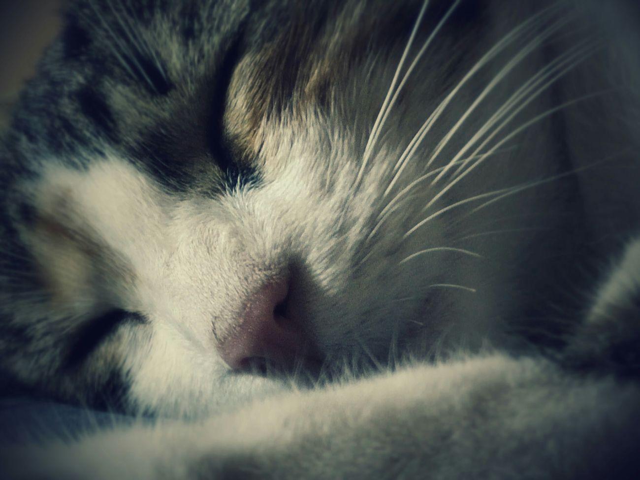 Gato Cat Sleep Dormir Bedtime Bed