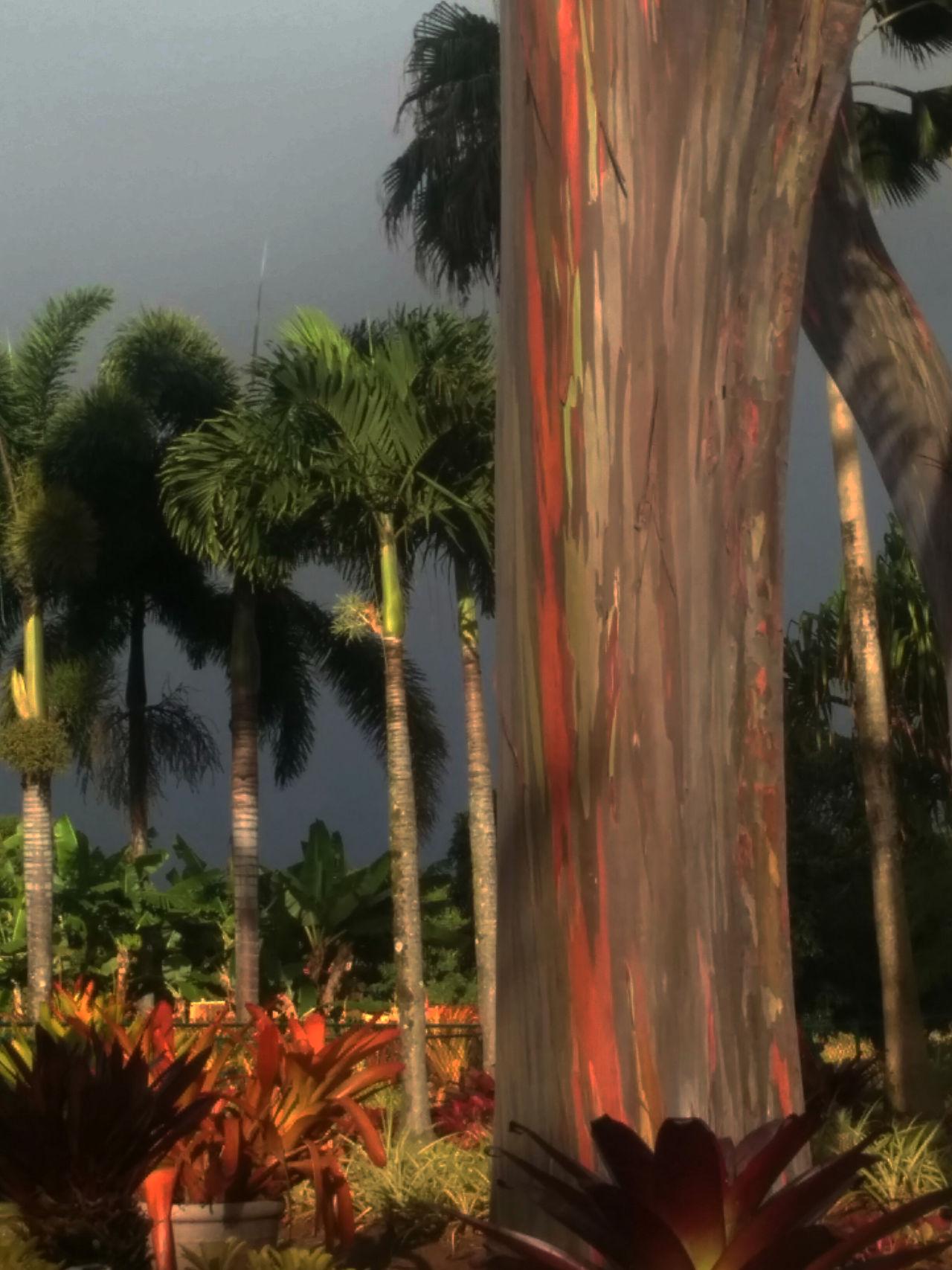 Dole Plantation Oahu, Hawaii