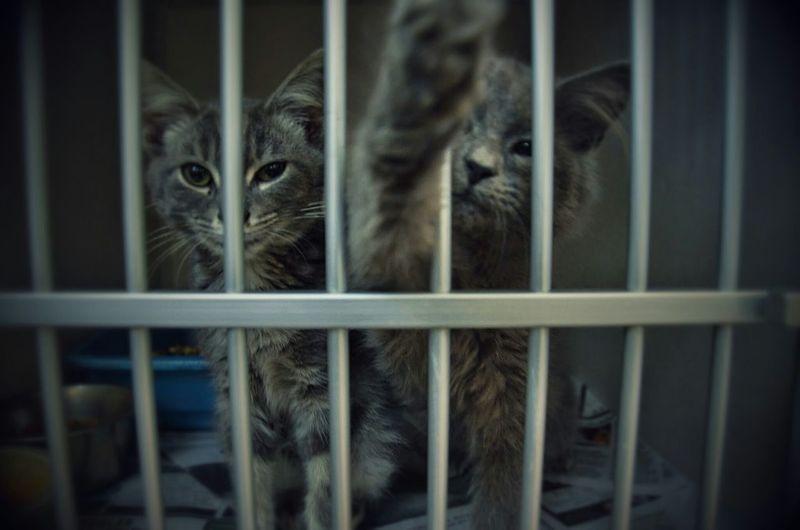 Animal Shelter Kittens Adopt A Shelter Pet Photography Animals Bestoftheday