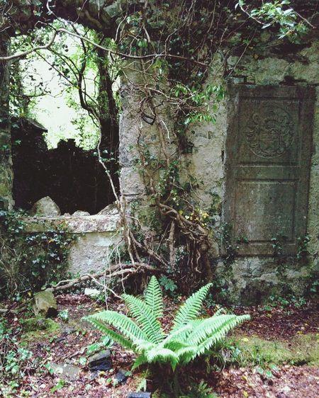 Traveling trough Ireland Ireland Ruins