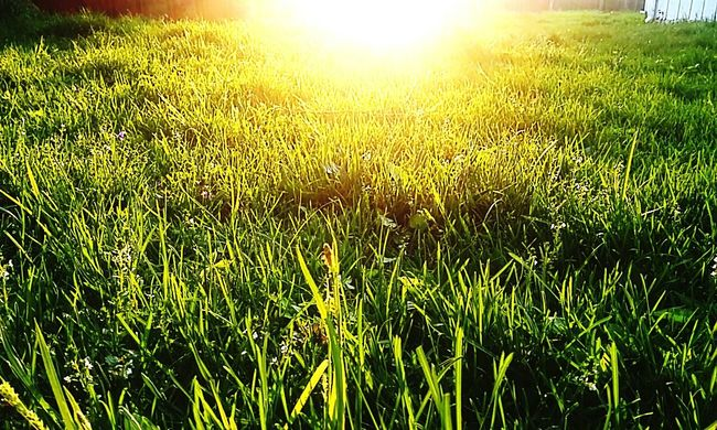 I love nature shots. Grass in the right light is so beautiful