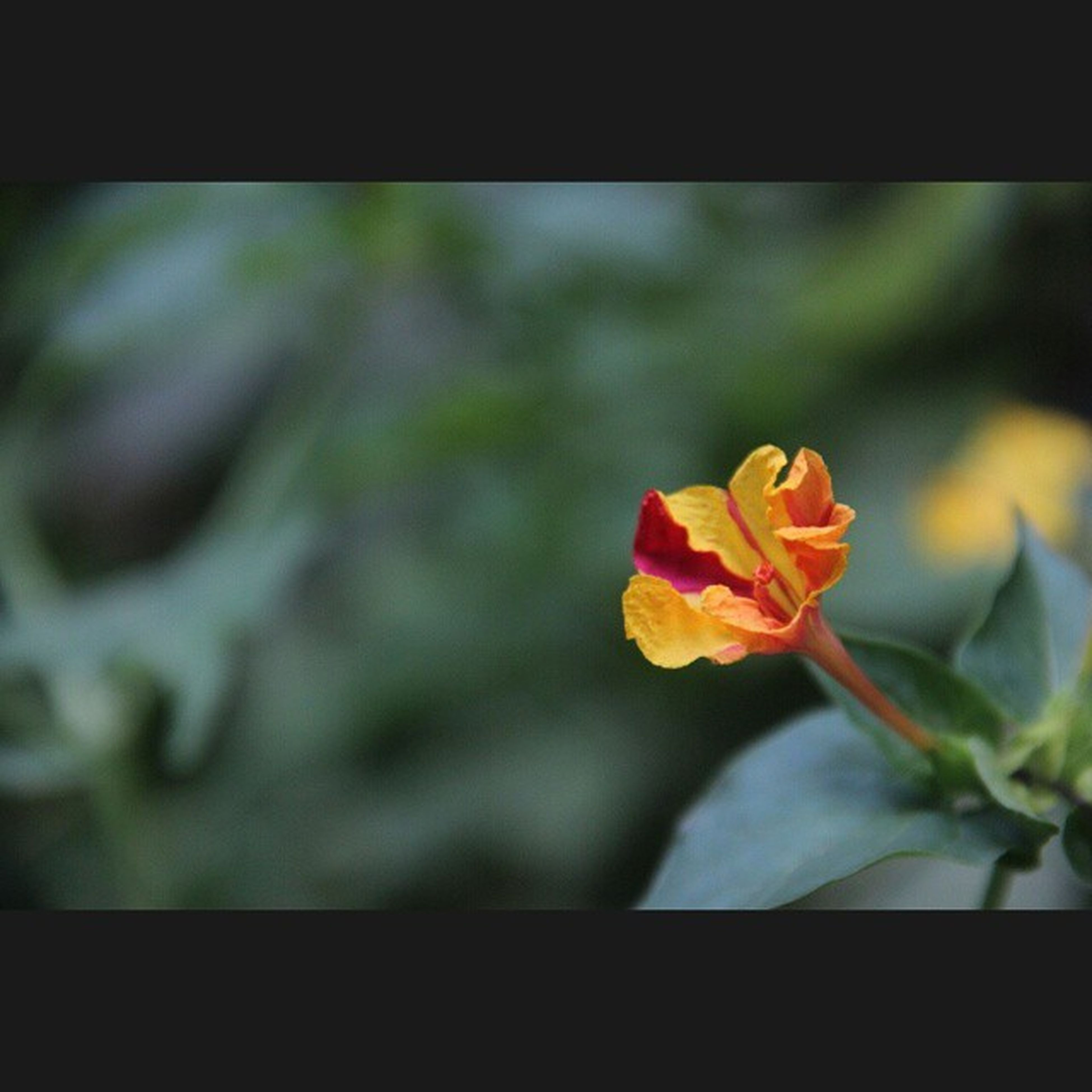 Simplicity. Flower Flowerssofinstagram Colorful Green Gogreen Flowerstagram Floweroftheday Buffering Nofilter Mustaffa HASHTAG Tagsforlikes Follow