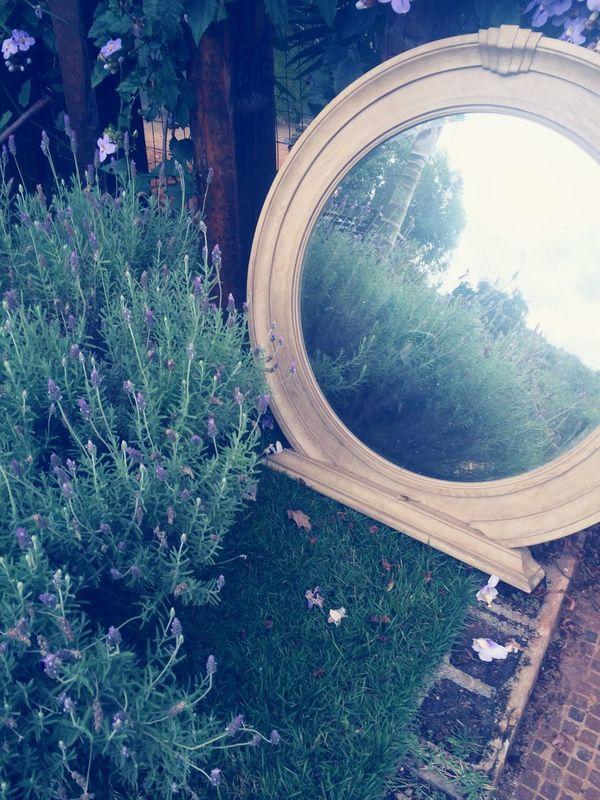 Mirror Flower Photografhy Show Sun Morning
