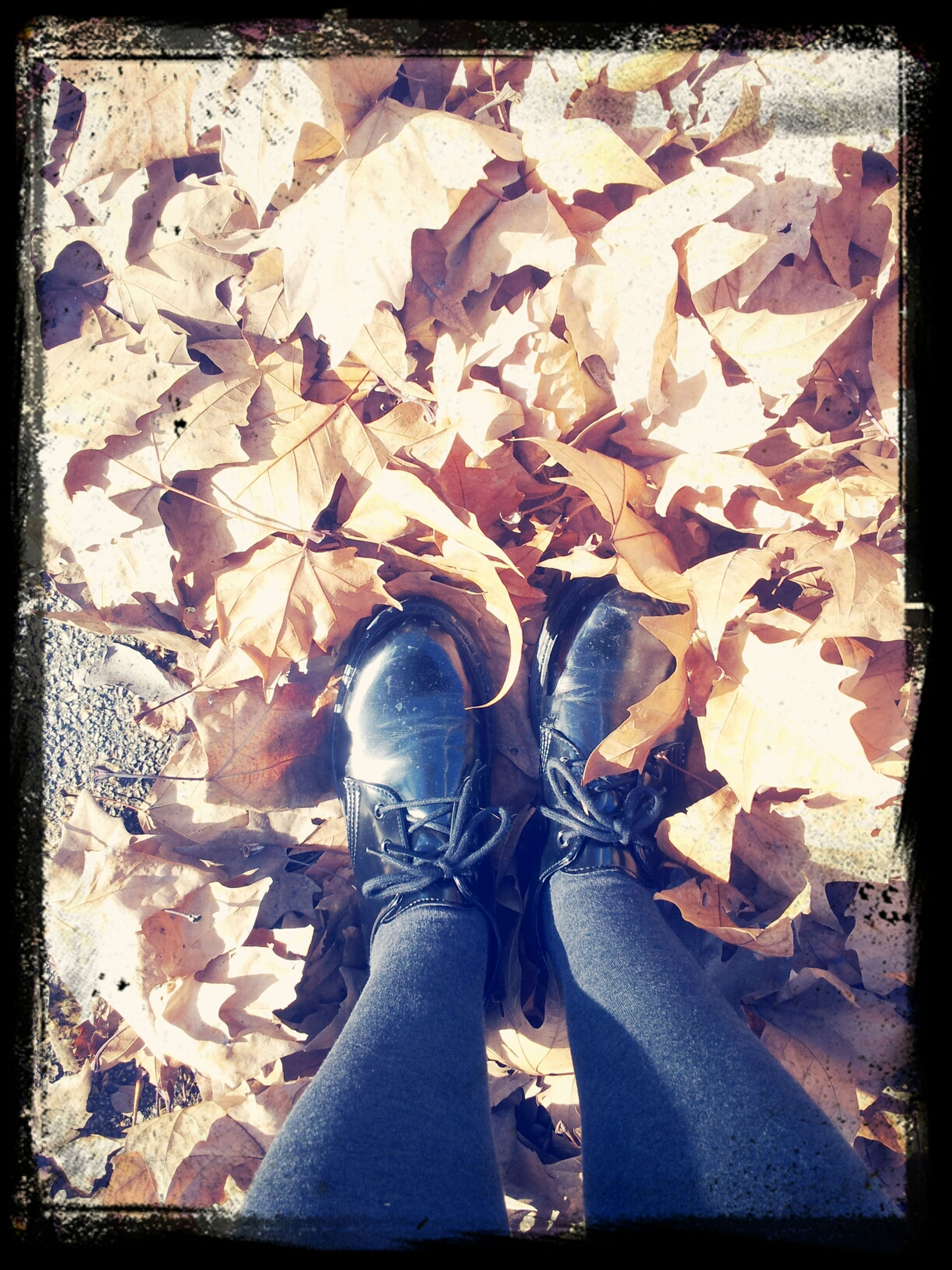 Fall Of The Leaf Outfit Of The Day