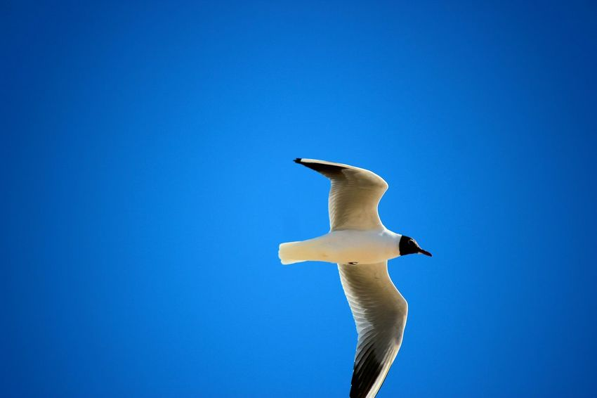 Bird Flying Sky Animal Animal Themes One Animal Animal Portrait Flying In The Sky Flying Bird Fly Bird Fly