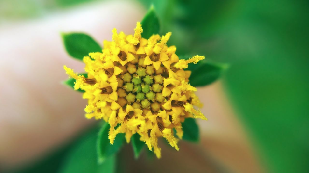 Smallflower Green Yellow Nature Beauty In Nature Outdoors