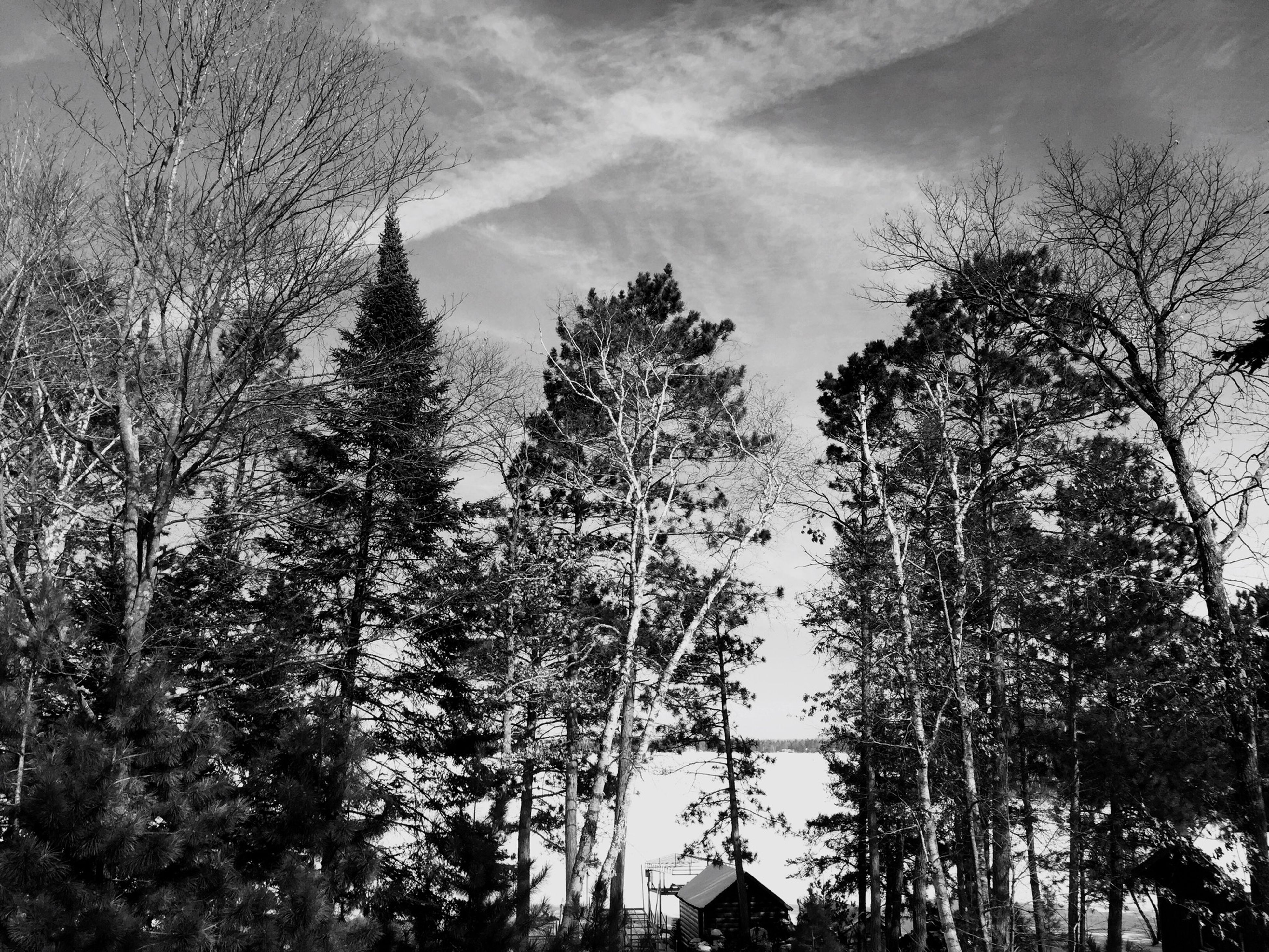 tree, sky, low angle view, branch, tranquility, bare tree, growth, nature, tranquil scene, beauty in nature, scenics, forest, built structure, building exterior, day, outdoors, no people, architecture, tree trunk, woodland