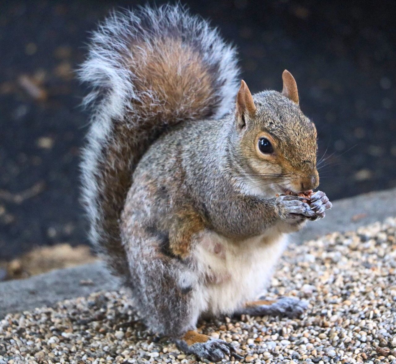 One Animal Animal Themes Squirrel Animals In The Wild Mammal Animal Wildlife Full Length No People Nature Outdoors Day Close-up Tail