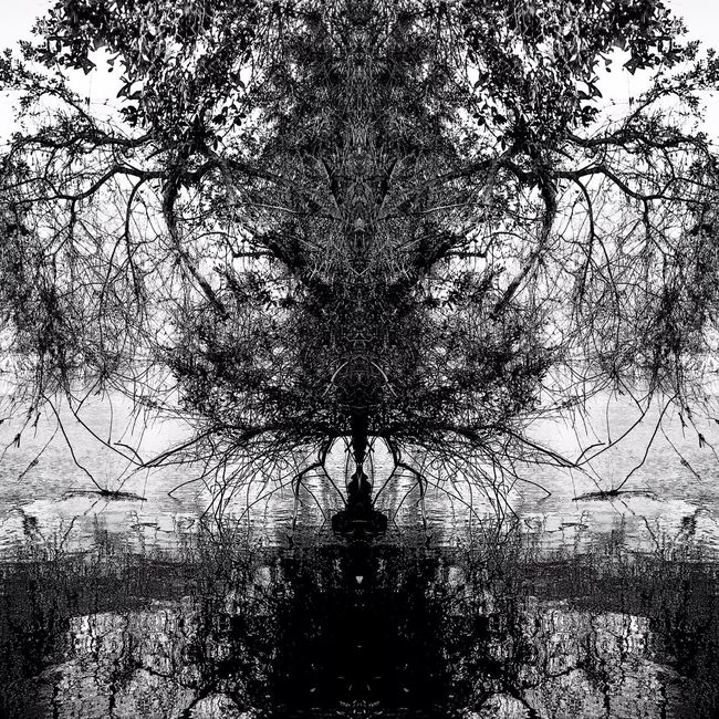 Pattern Pieces Check This Out Playing With Pictures. Natural Design Beauty In Nature Symmetry Getting Creative Gettinginspired Blackandwhite
