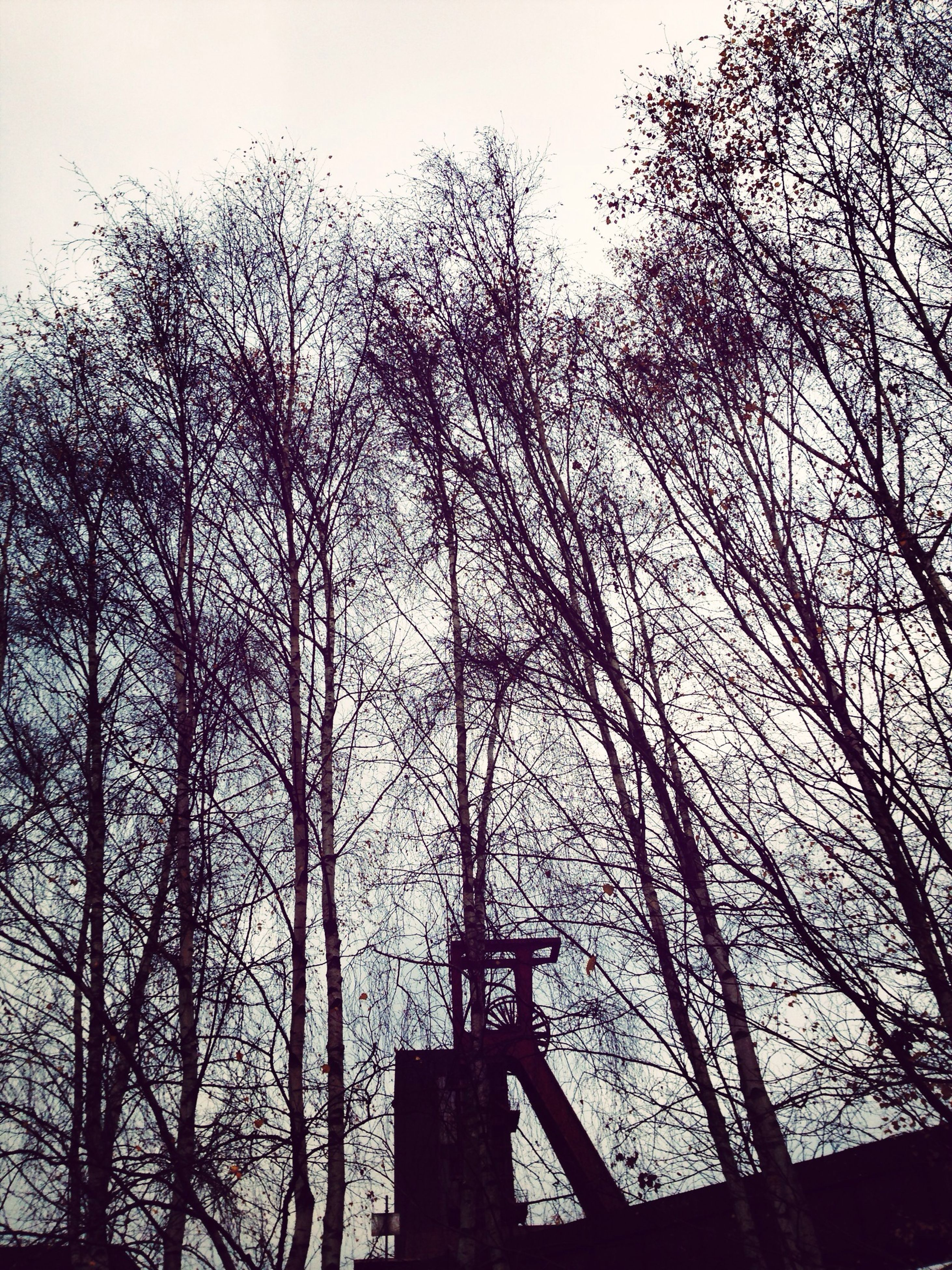 tree, silhouette, bare tree, low angle view, branch, built structure, sky, architecture, nature, tranquility, building exterior, outdoors, railing, tall - high, growth, clear sky, tree trunk, day, no people, dusk