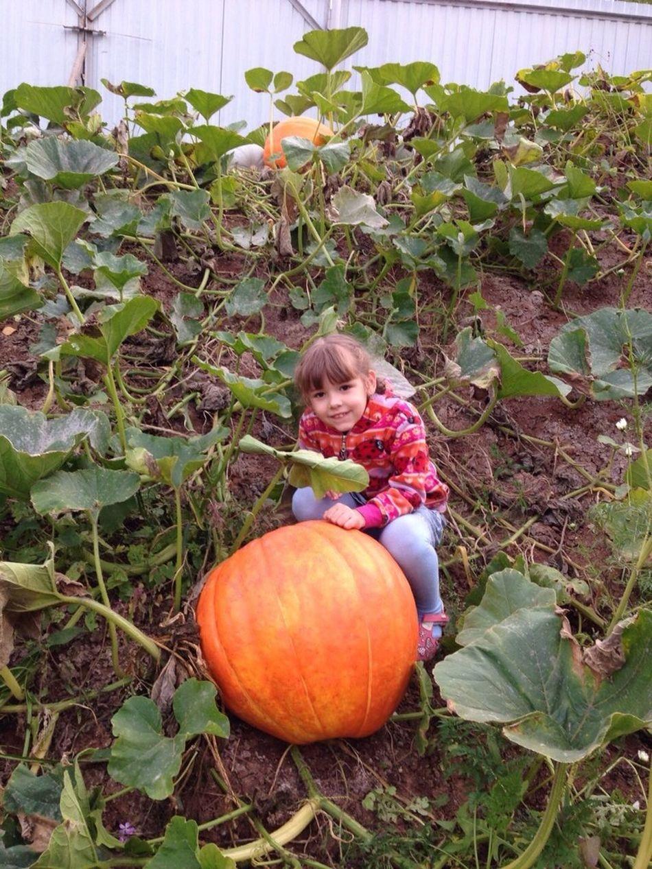 In My Garden Красный пахарь Children Cheese!