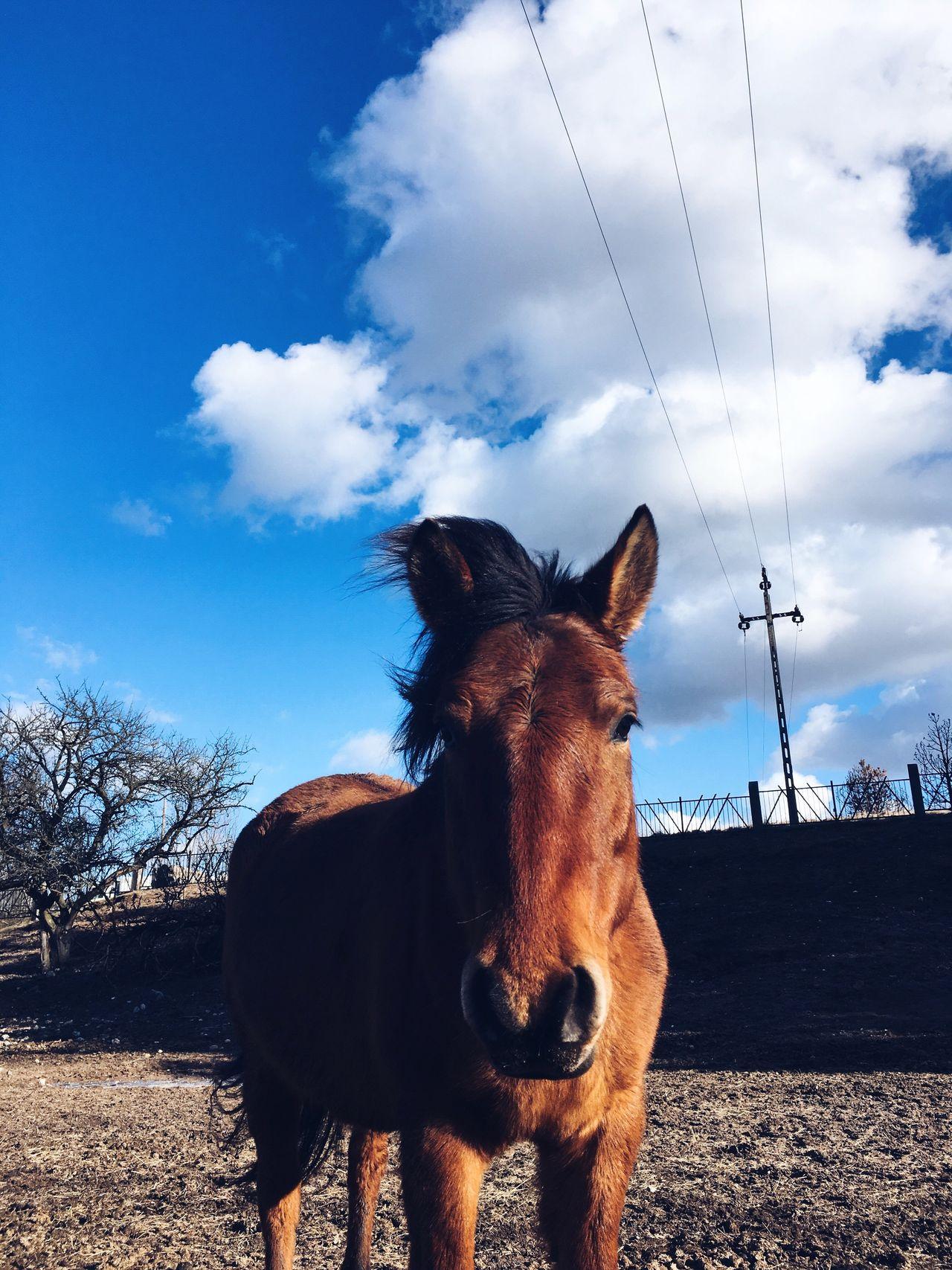 Horse Huculhorse EyeEmNewHere