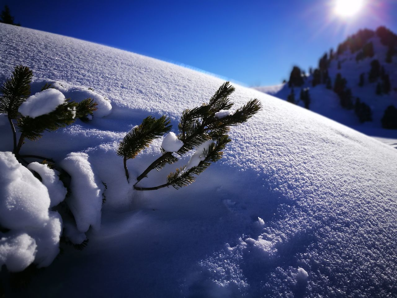 snow, cold temperature, winter, nature, beauty in nature, no people, close-up, scenics, outdoors, sky, day, blue, sea, tree