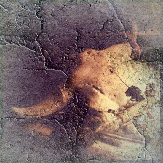 Buffalo Bison Antiquus Fossilized Wäkan Sacred Native American Indian Skull Artifact Ceremony