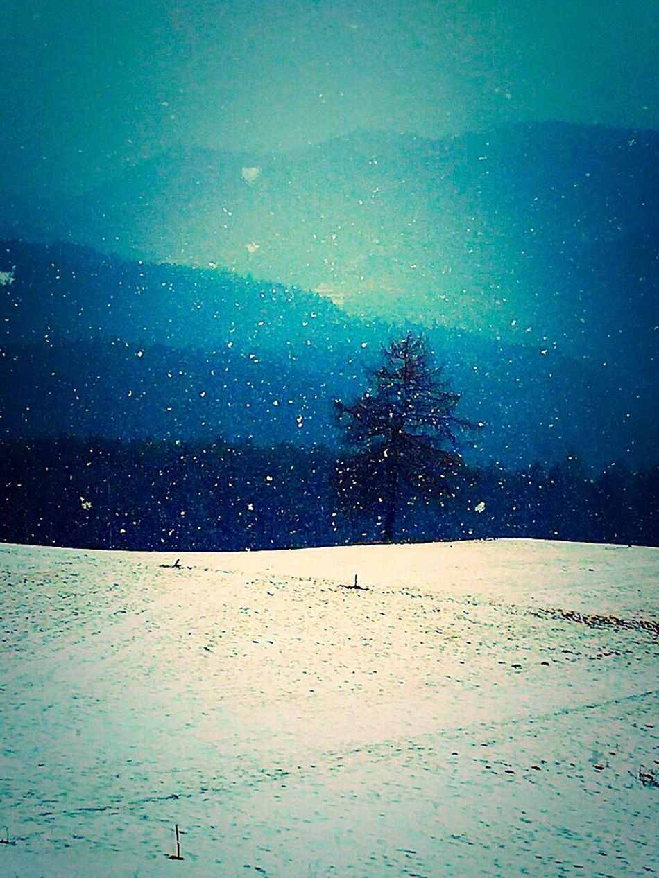 Let it Snow... Snow Tranquil Scene Tranquility Beauty In Nature Snowing Love To Take Photos ❤ Beautifulnature EyeEm Nature Lover Livingnature Enjoying The View MagicalMoments Letissnow Winter_collection Eyem Gallery EyeemTeam Power In Nature Eyeem Market Winter Trees Livefree Free Freestylephotography Mytree LoveNatureAndMountain