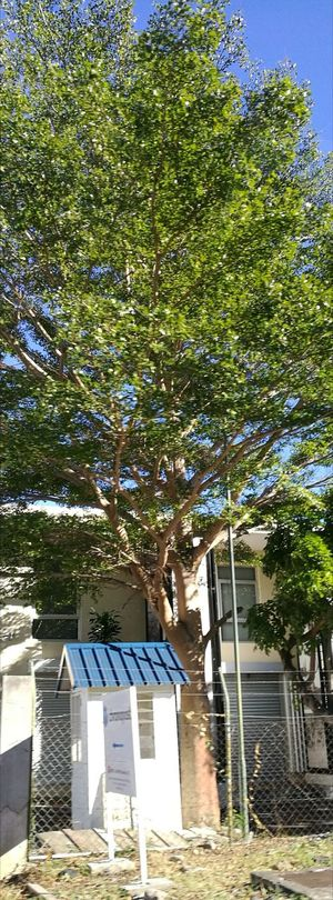 Built Structure Outdoors Building Exterior Blue Sky Bright Daylight Tree Branches
