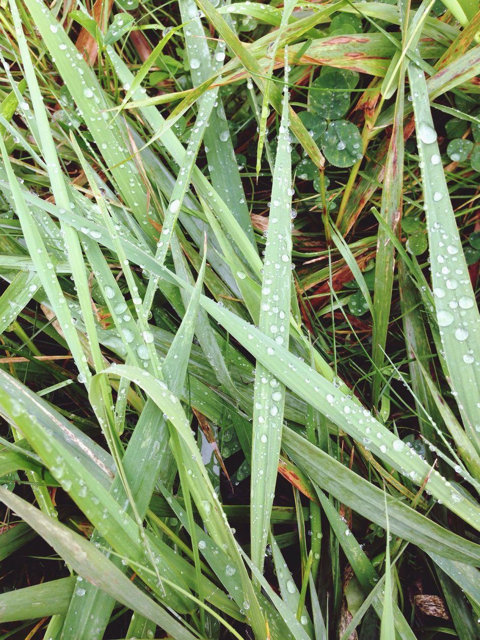 Étienne Gabriel Rousseau Nature EyeEm Nature Lover Nature Photography Naturelovers Beautiful Nature Macro Nature Rainy Day Raindrops Green Grass