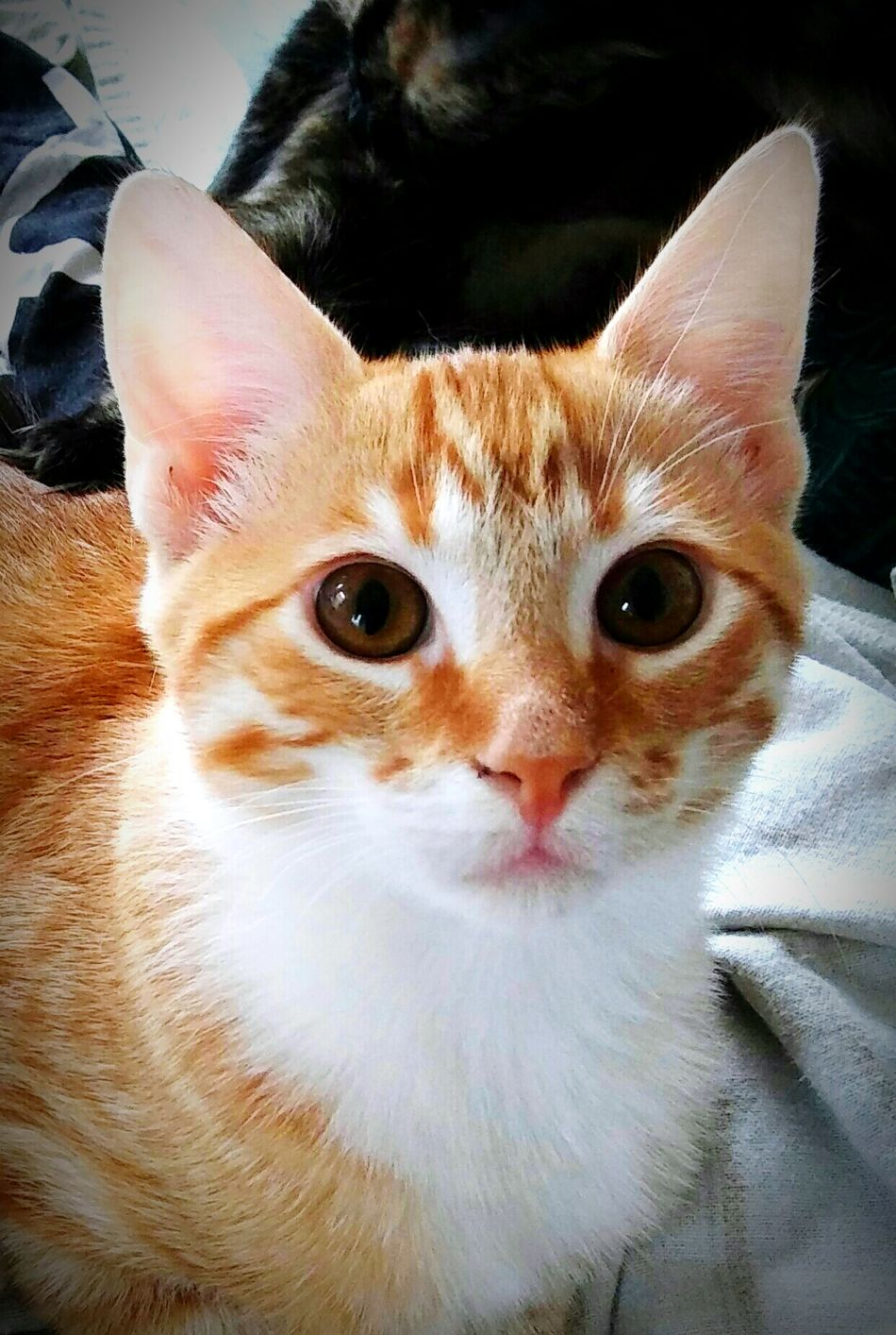 My sweet and handsome Lil Maximus ..😘😘🙌💕💕💙💚💙 Hanging Out Check This Out Taking Photos Cheese! Hi! Bayareaphotography Beautiful Eyes Gingersrule Gingercatsofinstagram Loveallanimals Cat Eyes Animals Catsofeyeem Catlovers ❤️🔥❤️ Paws And Purrs Catsoftheworld Animal Photography Pawsome Catstarcat Precious Little Moments