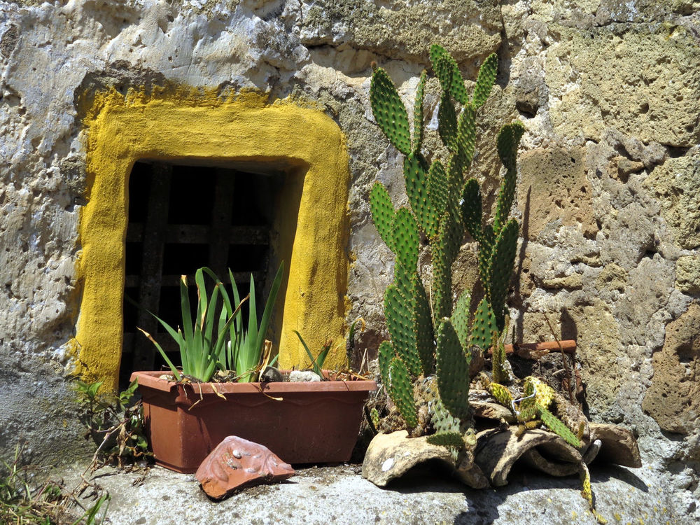 Abandoned Cactus Central Italy Daylight House Exterior No People Outdoors Smart Simplicity Stone Wall Succulent Plants Sunny Day Wall - Building Feature Window Frames The Essence Of Summer Live For The Story
