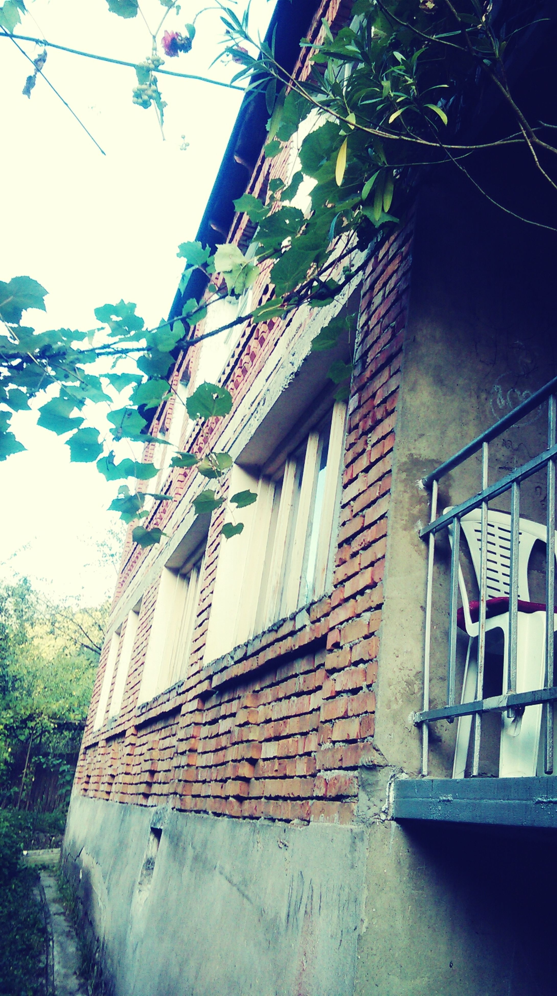 building exterior, architecture, built structure, house, window, residential structure, residential building, building, day, low angle view, tree, outdoors, no people, sky, sunlight, plant, glass - material, nature, abandoned, old