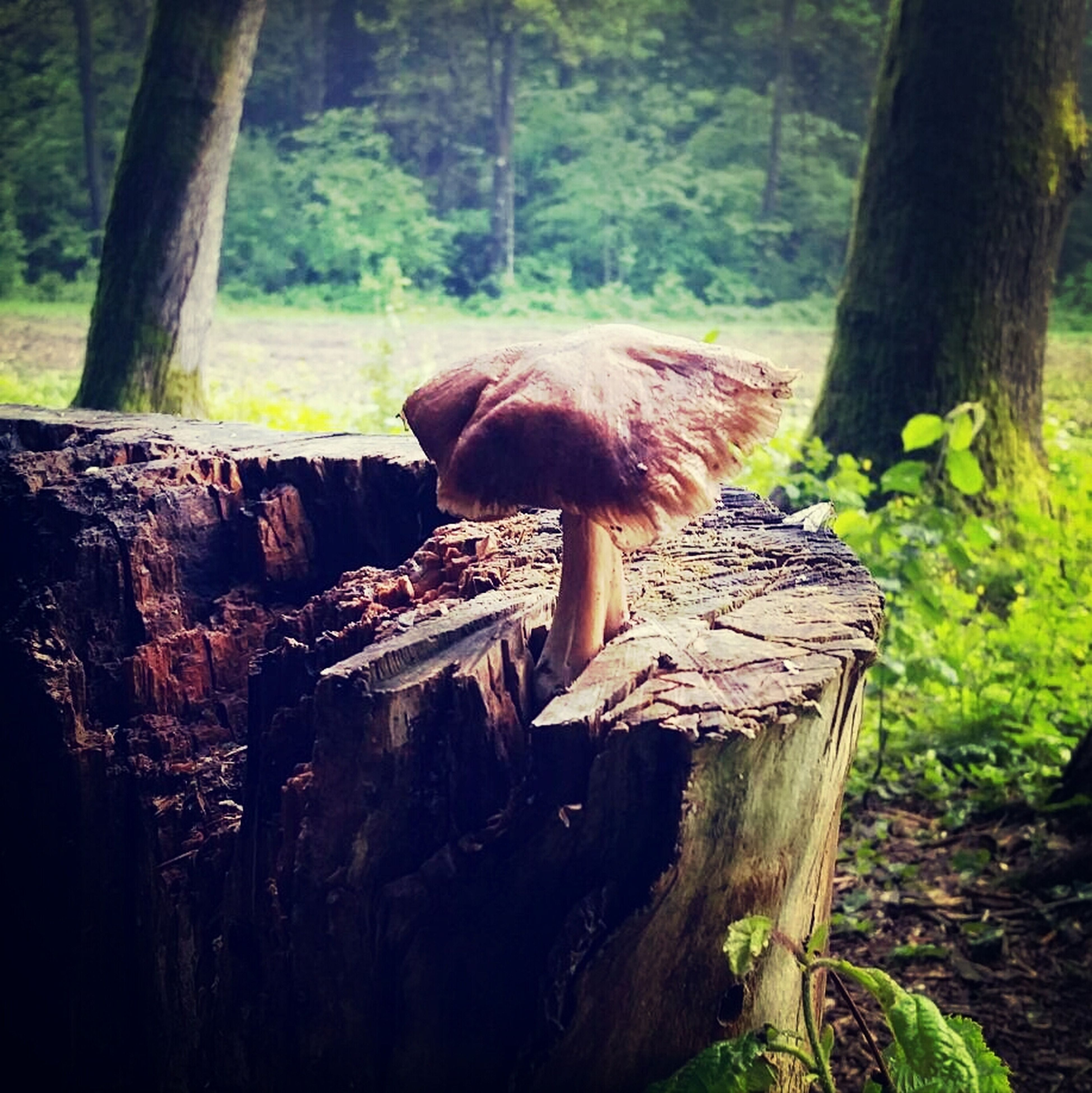 tree, forest, animal themes, tree trunk, mammal, one animal, wood - material, nature, wildlife, log, woodland, animals in the wild, full length, day, relaxation, outdoors, no people, sitting, side view, tree stump
