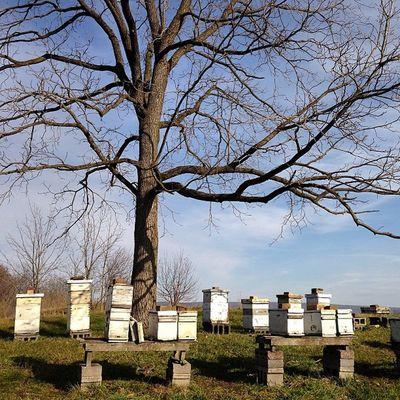 The bees sleep in on Black Friday. #squareready #bees #beekeeping #instatagapp #instagood #iphonesia #photooftheday #instamood #igers #instagramhub #picoftheday #instadaily #webstagram #instagramers #statigram #igaddict #iphoneartists #iphoneonly #jj_foru Webstagram Instadaily Bees Instatagapp WeAreJuxt Jj_forum Iphoneonly Igaddict Photooftheday Instagrammers Iphonesia Instaaddict Picoftheday Canvaspop Instamood Iphoneartists Pennsylvania Squareready Igers Mnolt Jj  Beekeeping Instagramers Instagood Statigram Instagramhub