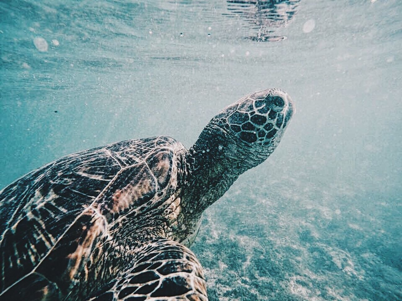 Mr turtle Animal Themes Swimming Turtle Sea Turtle Water Sea Animals In The Wild Animal Wildlife Reptile Underwater Sea Life One Animal Nature Close-up UnderSea No People Outdoors Day EyeEmNewHere Adventure Underwater Photography UnderSea