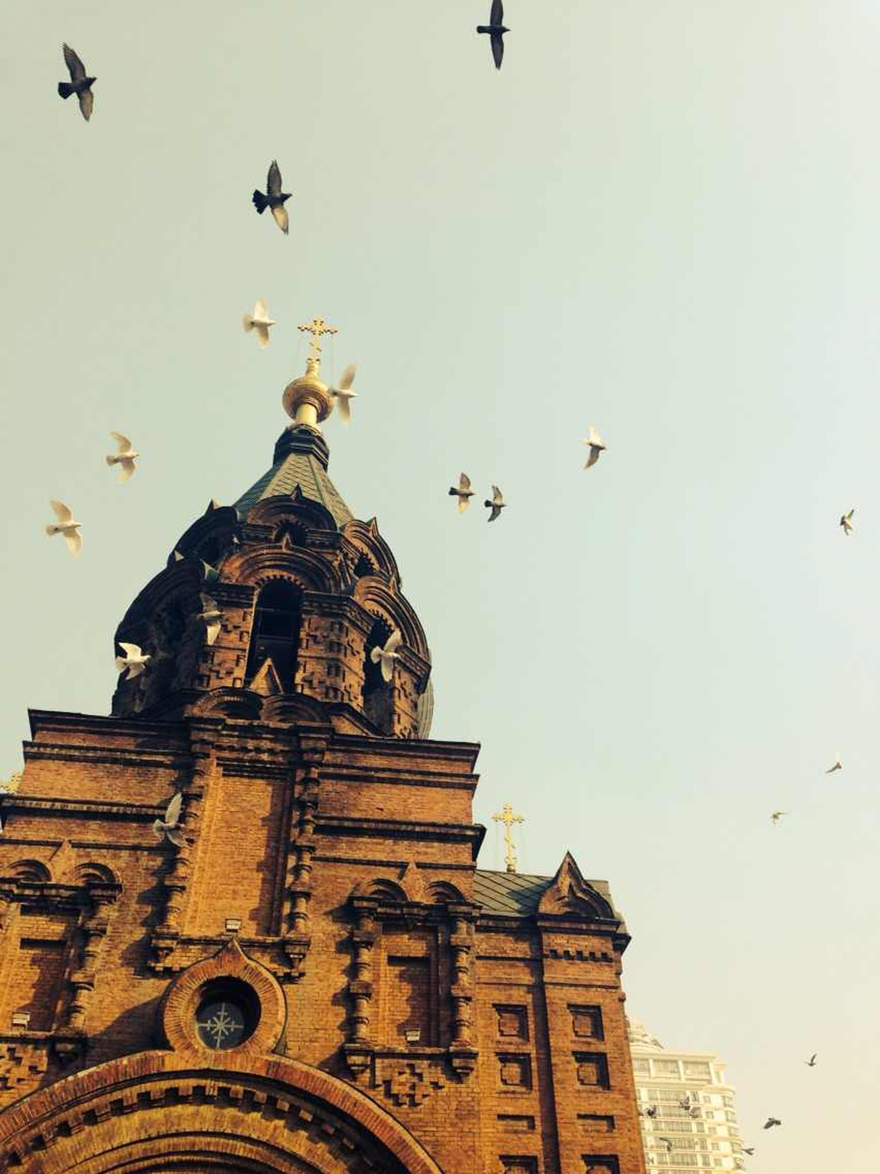 bird, low angle view, architecture, building exterior, flying, animals in the wild, built structure, animal themes, wildlife, religion, place of worship, clear sky, church, spirituality, history, dome, sky, flock of birds