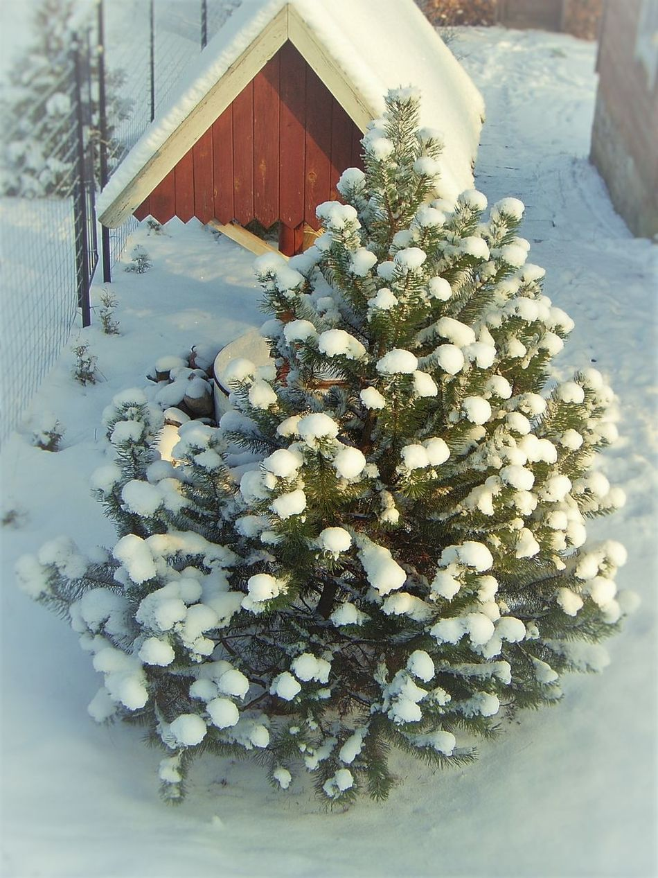 Botany Cold Herringbone Nature Outdoors Showcase: January Snow And Tree Snow Toys Tree White White Color Winter It's Cold Outside