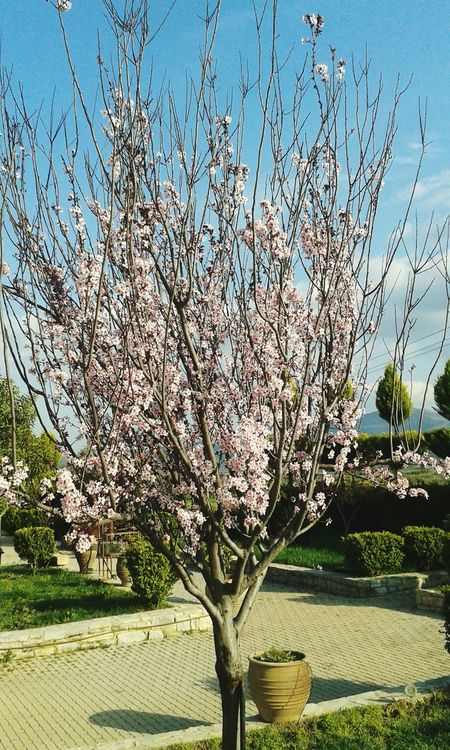 Check This Out Enjoying Life Greetings From Greece (Crete)  Almond Tree Spring